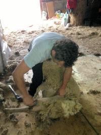 shearing-gadget